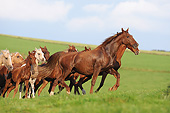 HOR 01 SS0386 01