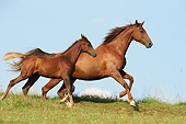 HOR 01 SS0390 01