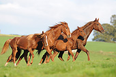 HOR 01 SS0391 01