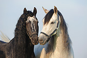 HOR 01 SS0392 01