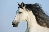 HOR 01 SS0393 01