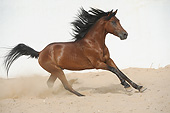 HOR 01 SS0395 01