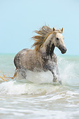 HOR 01 SS0399 01