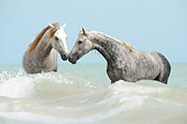 HOR 01 SS0401 01