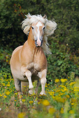 HOR 01 SS0408 01