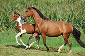 HOR 01 SS0425 01