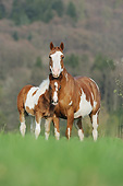 HOR 01 SS0432 01