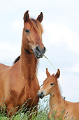 HOR 01 SS0438 01