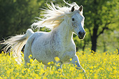HOR 01 SS0451 01
