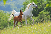 HOR 01 SS0452 01