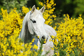 HOR 01 SS0453 01