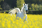 HOR 01 SS0454 01