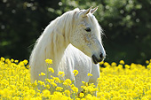 HOR 01 SS0458 01