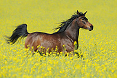 HOR 01 SS0459 01