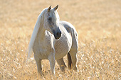 HOR 01 SS0460 01