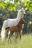 HOR 01 SS0461 01