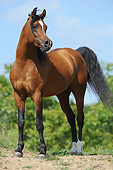 HOR 01 SS0463 01