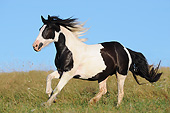 HOR 01 SS0468 01