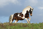 HOR 01 SS0469 01