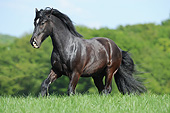 HOR 01 SS0470 01