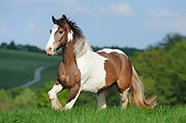 HOR 01 SS0473 01
