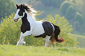HOR 01 SS0474 01