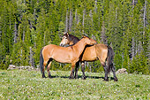 HOR 01 TL0035 01