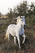 HOR 01 WF0002 01
