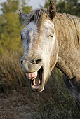 HOR 01 WF0003 01