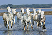 HOR 01 WF0006 01