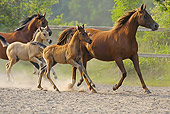 HOR 01 WF0011 01