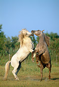 HOR 01 WF0015 01
