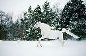 HOR 01 DB0002 01