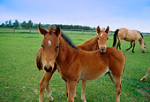HOR 01 DB0004 01