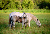 HOR 01 DB0008 01