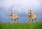 HOR 01 DB0013 01