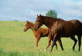 HOR 01 DB0017 01