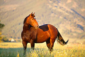 HOR 01 DB0025 01