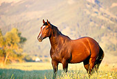 HOR 01 DB0025 02