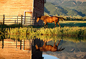 HOR 01 DB0028 01