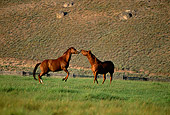 HOR 01 DB0034 01