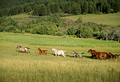 HOR 01 DB0036 01