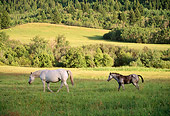 HOR 01 DB0037 01