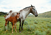 HOR 01 DB0038 01