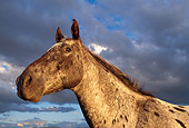 HOR 01 DB0043 01