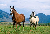 HOR 01 DB0046 01
