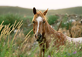 HOR 01 DB0047 01