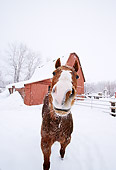 HOR 01 DB0048 01