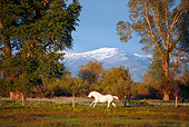 HOR 01 DB0054 01