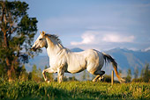 HOR 01 DB0055 01